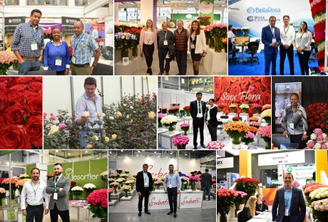 Floraldaily Global Flower News