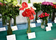 The anthurium variety Fire/Calisto of Agromiranda won the gold medal in the Quality competition.