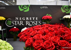 The roses of Negrete Star Roses.