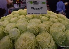 It looks hot! This is the Wasabi from Eco Roses.