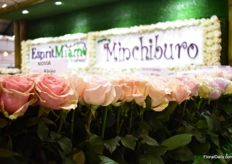 The roses of Minchiburo.
