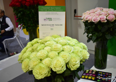 Agricola Circasia - Vuelven SAS wom a price for their Wasabi rose at the FlowersExpo in Moscow.