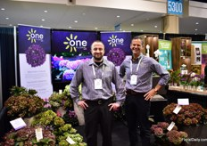 Nick Rhindress and Chris Jacobs of One Floral mainly grow hydrangeas in the US and Canada on a total acreage of 60 acre. According to Jacobs, the demand is on the rise and this is mainly due to the improvements in the varieties. They work with genetics of Danish breeder Schroll and as they hydrangea assortment used to consist of only two varieties there are many more now and with a longer shelf life. From summer till October, the plants flower with color changing blooms.