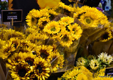 Jolo Flowers's journey started 20 years ago, when they onle grew sunflowers in Florida.