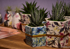 Succulents in hardware are very popular; this one is part of the Trendsetter collection of Live Trends.