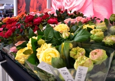 It has been a very good breeding year for Rosa Eskelund of Roses Forever. She brought several of her creations to the show to gather the reactions from the visitors. On the picture just several of her new varieties that were on display.