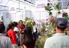 Busy at the booth of Orquideas de la Sierra, a Mexican orchid grower.
