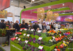 A full house at Syngenta Flowers