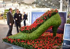 The large shoe of Elvira Rose filled with the new red pot rose variety of Q-iRose; Tanja.