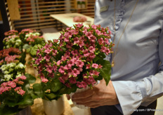 One of their new colors in the Kalanchoe series. According to Louise, it looks like a colour of a hydrangea.