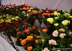 Also at the IPM Essen show, Roses Forever presente some new codes. After evaluating the reactions and trial results, breeder Rosa Eskelund will decide with what varieties she will continue.