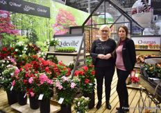 Helle Graff and Nethe Stensgaard of Graff. Spotlight at their booth is their new dipladenias in the series; Q-deville. Out of Uganda and Vietnam they can supply growers all over the world.