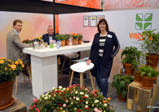 Jolanda Nieuwenhuijze of plant nursery Valstar. In winter, the assortment only comprises pot roses, but from this week it will include hydrangeas again. The potted mums will follow soon after.