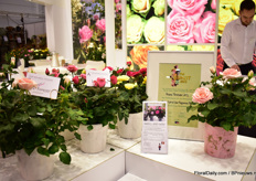 The public choice award for scented pot roses was won by Roses Forever for the line 'Love Fragrance Forever'