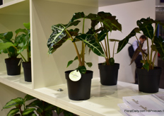 A variety in the Greenhome concept of Easycare.