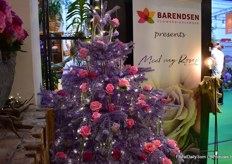 Barendsen presents Meet my Roses of De Ruiter.