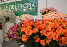 The spray roses of Bella Flor-Ethiopia.
