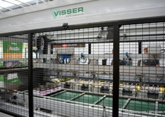 The machine of Visser that can pot over 10.000 youngplants per hour.