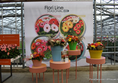 The new Flori Line / Seasonal mix of Florist Holland. They want to inspire the growers with these concepts and help them showing the trends and making seasonal offered mixes. Also they want to inspire the consumer with this new concept to show them that there are a lot more possibillities with the gerbera.
