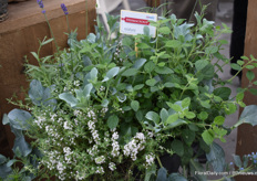 A herbmix in one pot. There are several. There are several combinations for different tastes.