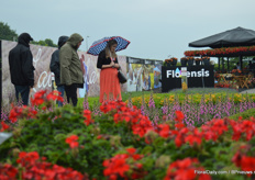 Unfortunately, on the second and third day of the FlowerTrials it was raining. However, it did not stop the visitors from checking out the varieties outside.