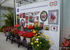 Also at this location, the nominees of the Fleuristar award presented. Begonia x hybrida Viking Red on Chocolate of Sakata Ornamentals was also competing.