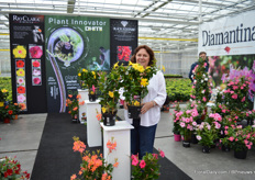 "Bernadette Raulf of DHMI presenting their new yellow dipladenia Citrine 2.0. ""When comparing this variety to the first version (on the left), it allows easier production under standard conditions - with better branching and higher vigor, has a larger flower size and a more golden yellow color."""