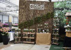 "Cocoon is another highlight of Hassinger. They introduced it at the IPM Essen and they are selling it to retailers and wholesalers for a couple of months now and according to Jasmin Hassinger, the demand is good. ""It is also a trend to have a 'Jungle' at home. On top of that, it is easy to care of."""