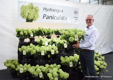 Jaap Stelder of Agriom presenting the new Hydrangea Paniculata, a compact paniculata for patio and micro gardening. The series consists of two varieties; Pandora and Panflora. Every stem produces a flower.