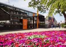 At the Dümmen Orange office in Rheinberg, they are also opening their doors for the FlowerTrials visitors.