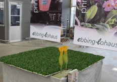 Ebbing-lohaus was presenting their varieties at the Westhoff location in Germany.