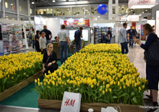 The tulips at Panin Plant attracted the attention of many visitors.