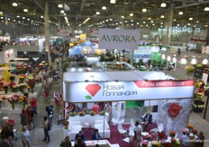 Elevated view of the show. In this part mainly the cut flower growers and exporters are presenting their products.