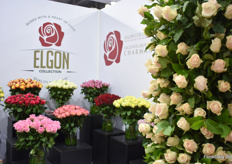Also the roses of Kenyan grower Mt Elgon Orchards were on display.