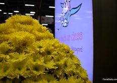 Chrysanthemums at The Elite Flowers booth.