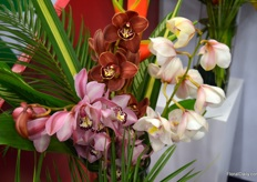 Beautiful cymbidiums