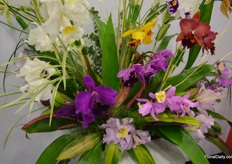 Wonderous orchids at Guapante