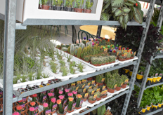The company's cactus plants are popular with customers