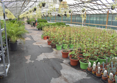 A look at some of the plants on offer