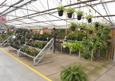 Another look at the variety of plants on offer at the shop floor