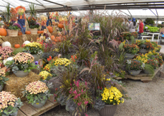 Autumn display featuring potted mums and celosias