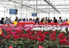 In the greenhouse, also called 'Trial Serre'. Guests are checking out all the varieties in their assortment, which are over 350 commercial varieties, and several experimental varieties.