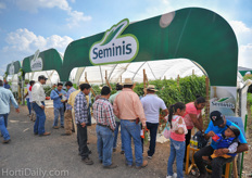 Seminis high tunnel crops.