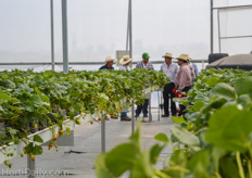 Mexican growers participating a workshop about the production of greenhouse strawberries.