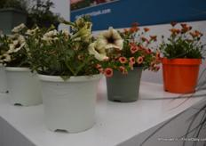 Other Natural colours in the Natural collection of Desch Plantpak.