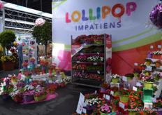 Lollipop is a new series of impatiens of Benary. At the moment, the series consist of 8 colours. It is tight flowering and flowers early. They bloom within one week. Everything is grown from seeds.