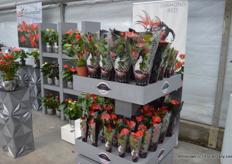 The Diamond Collection of Houwenplant, also presented at Rijnplant