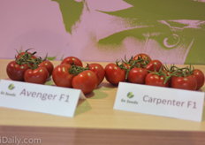 Avenger and Carpenter are strong varieties from Gautier.
