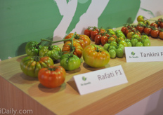 Also RAF type tomato Rafati is a popular breed.