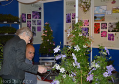Lindsay Reid from The Guernsey Clematis Nursery showing their Clematis to a visitor.
